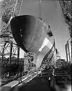 The Irish Rowan under construction at Verolme Cork Dockyard. It was the first vessel built by the newly-formed dockyard and was operated by Irish Shipping..30.11.1961