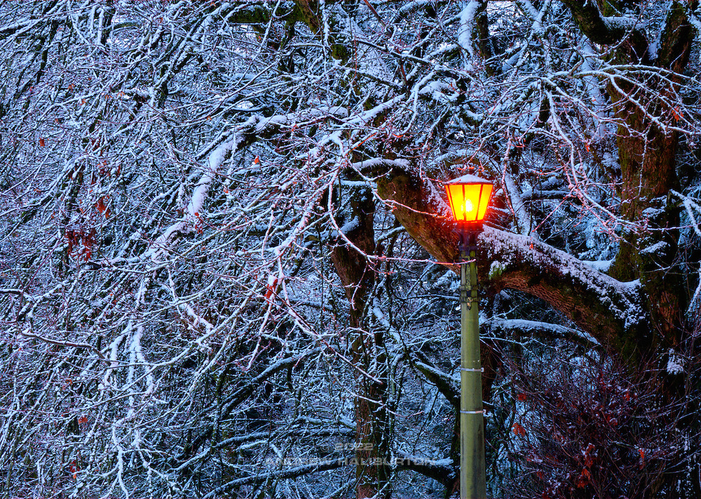 Original light fixture in snow, Mount Tabor Park, Portland.  In 1903, John Charles Olmsted of the Massachusetts-based landscape design firm Olmsted Brothers recommended that a city park be developed at Mount Tabor.  Portland Parks Superintendent Emanuel T. Mische, who had worked at Olmsted Brothers, consulted with Olmsted on the park layout and integration of the reservoirs into the park design.  Photo 12/25/2008.