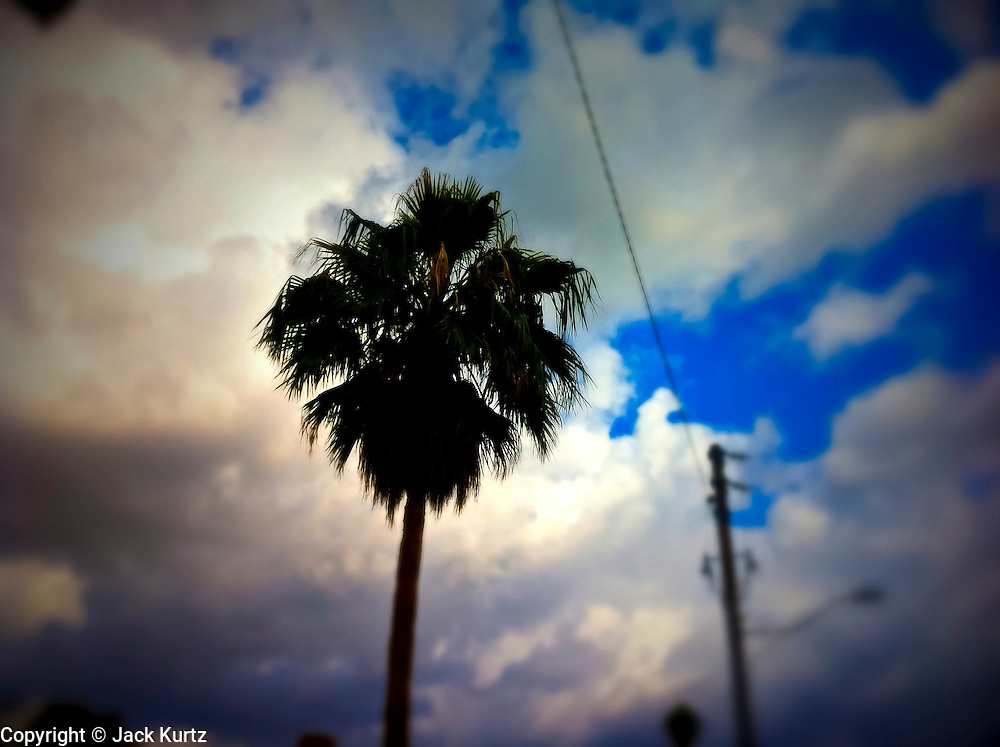 21 NOVEMBER 2011 - PHOENIX, AZ: A Palm tree in clouds in Phoenix, AZ.  PHOTO BY JACK KURTZ