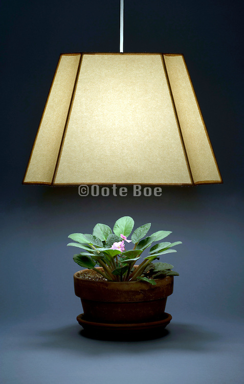 illuminated lamp with a shade shining on a plant