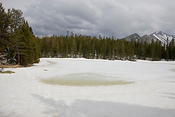 Nymph Lake is still covered by several feet of snow and ice in the middle of May, 2008.  Rocky Mountain National Park (RMNP), founded by act of the US Congress in 1915, contains 72 named peaks above 12,000 feet in elevation including the tallest mountain peak in Colorado - Longs Peak at 14,259 feet.  The park, located next to Estes Park, CO, has five visitor centers and is traversed by the Trail Ridge Road (US highways 34 and 36).  Over 3 million visitors travel to the park annually to experience diverse mountain terrain, wildlife and recreation.