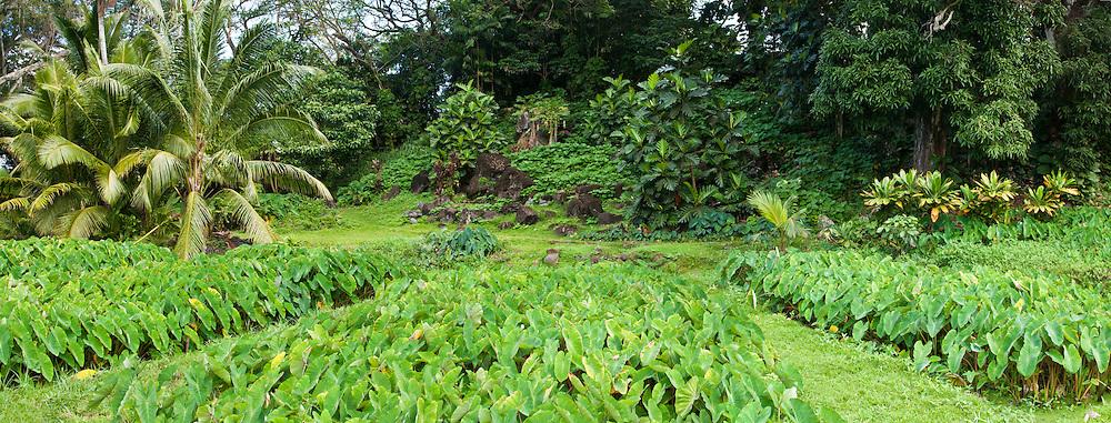 Taro field, Ulupo Heiau, Oahu, Hawaii