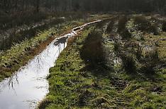 De Dennen, Staatsbosbeheer, Westermient, Texel, Noord Holland