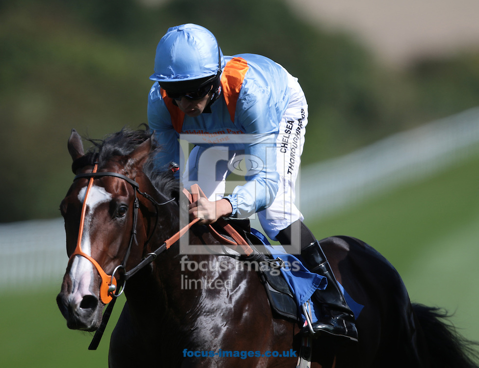 Devil's Bridge ridden by Sean Levey in the Lester Brunt Wealth Management EBF Stallions Novice Stakes during the CGA and EBF Race Day at Salisbury Racecourse, Salisbury<br /> Picture by Paul McQuillan/Focus Images Ltd 07970 407177<br /> 01/09/2016