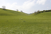 Sheep are standing in a field on the way to Thixendale, Yorkshire, England, United Kingdom.