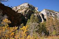 Fall colors along the West Fork Trail - Oak Creek Canyon, AZ