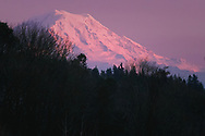 Mount Rainier pink at Dusk - view from Northeast Tacoma, WA