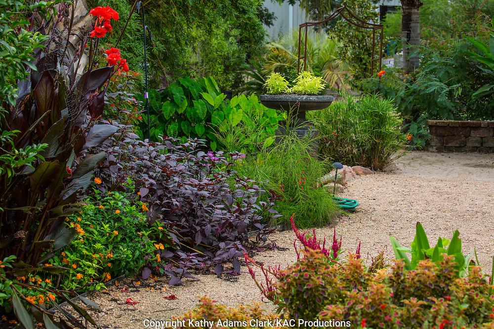 Garden, canna lily, sweet potato, firecracker, Houston, late summer, Texas.