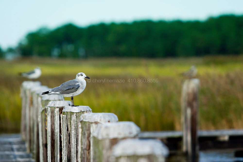 A seagull sentry watches for its next catch.