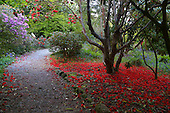 Trengwainton Gardens 721