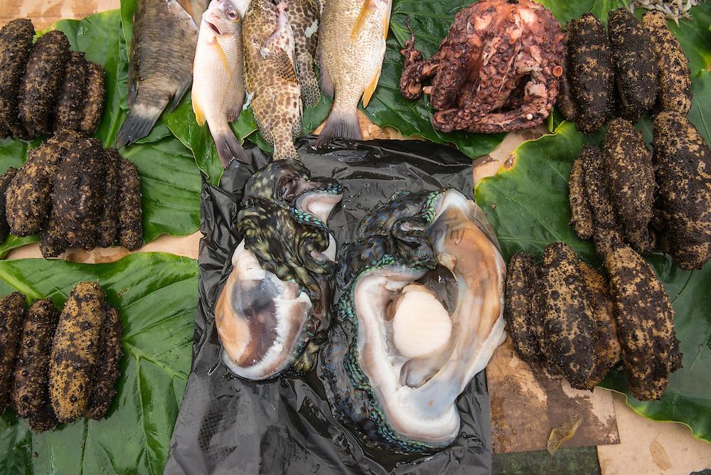 Coral Reef Species for sale<br /> INC. Giant clam, Sea Cucumber, Octopus<br /> Suva Sea Food Market<br /> Suva<br /> Viti Levu<br /> Fiji. <br /> South Pacific