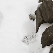 Other objects in the igloo, penguin skin and what appears to be part of the canvas roof popping up through the snow cover.