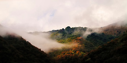 Low hanging clouds partly obscure a forest in autumn colours in Tuscany.