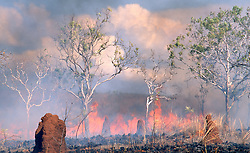 A fire sweeps through bush on Mt Hart Station in the Kimberley.
