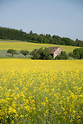 Rapsfeld, Landschaft im Frühling, Taunus, Hesse, Deutschland | rape field in spring, Taunus, Hesse, Germany