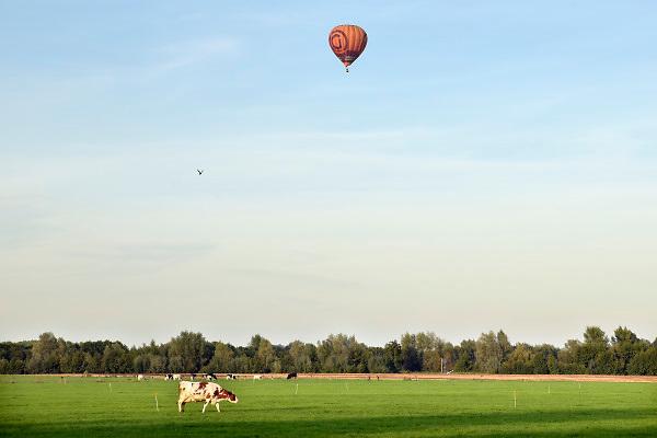 Nederland, Hummelo, 17-9-2018Een luchtballon vaart, vliegt, drijft, over weilanden met koeien . Boeren willen een vergoeding van de schade als een ballon op hun grond, wei, akker, landt.Foto: Flip Franssen