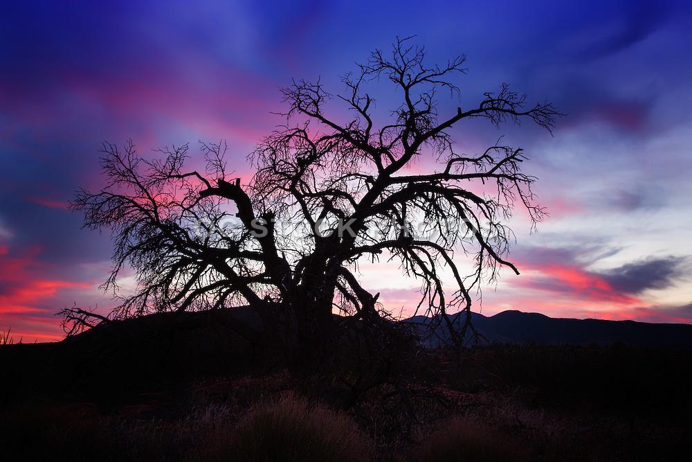 Toroweap Grand Canyon Arizona