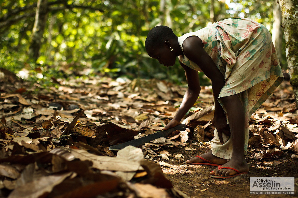 Koffi Affoue Ange, 10, uses a machete to clear dry leaves under cocoa trees on her family's cocoa plantation near the village of Soumaorodougou, Bas-Sassandra region, Cote d'Ivoire on Saturday March 3, 2012. She goes to school but helps with farming chores on weekends.