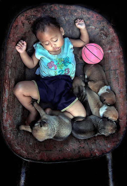 As the day comes to an end on a Savannakhet farm in Laos a toddler and his puppies take a well earned rest in their wheelbarrow.