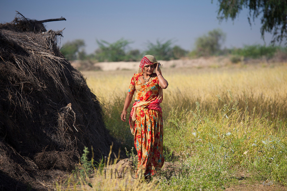 Indian Bishnoi woman agricultural worker near Rohet in Rajasthan, Northern India