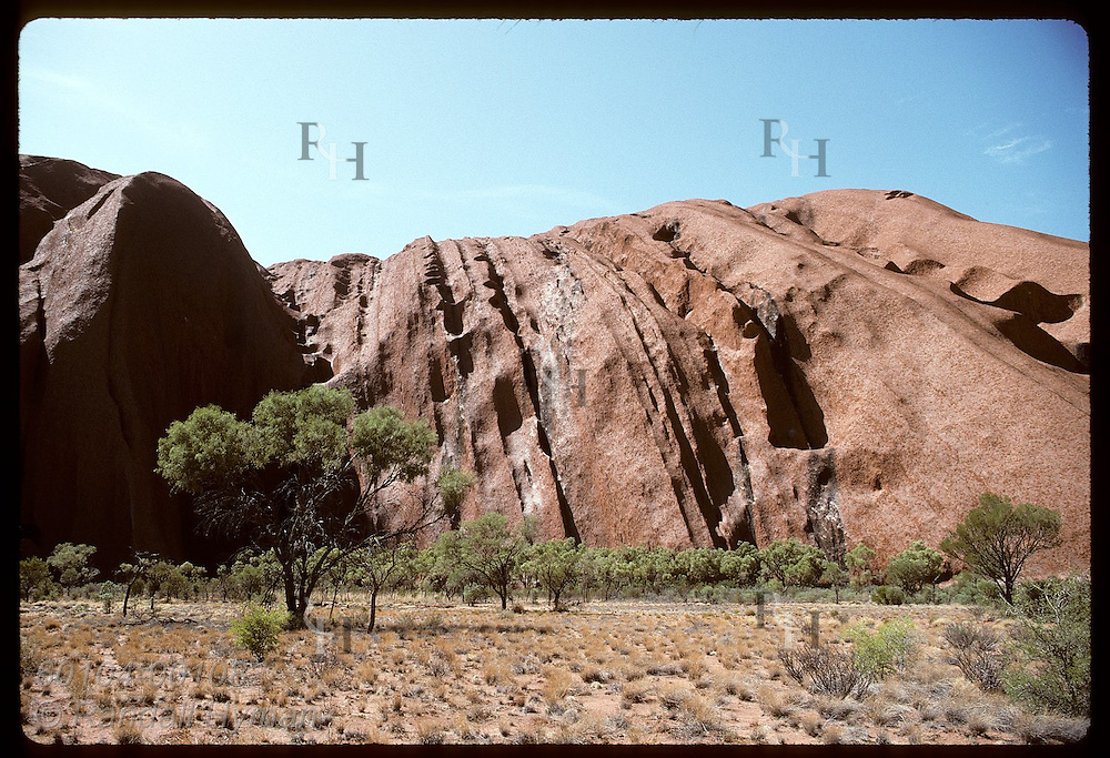 Trees thrive at base of Ayers Rock, which looms over them on a summer morn; Uluru Natl Park. Australia