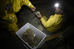 November 18, 2018 - Magalia, California, U.S. - JUSTIN ARCHER, right, a volunteer with North Valley Animal Disaster Group, worked after dark to make sure the turtles and other reptiles at this home were safe. It was determined that they would need a retile expert in the morning to assist in evacuating all the animals. Archer, was on one of a dozen or more animal rescue teams checking up on animals who were left at the Camp Fire.  (Credit Image: © Neal Waters/ZUMA Wire)