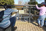 Mannheim. 16.02.17 | BILD- ID 043 |<br /> Luisenpark. Der aus dem Mannheimer Luisenpark verschwundene Pinguin ist tot. Das meldet die Polizei. Am Donnerstagmorgen gegen 8.30 Uhr habe ein Zeuge ihn am Rande eines Parkplatzes in der Museumstraße in der Mannheimer Oststadt gefunden. Anhand der Flügelmarke konnte das Tier identifiziert werden. Noch sei unklar, ob der Täter es dort tot abgelegt habe, oder ob es zu diesem Zeitpunkt noch lebte. Der Pinguin sei zwar ohne Kopf aufgefunden worden, aber die Polizei schließt nicht aus, dass sich ein anderes Tier an ihm zu schaffen gemacht hat. Der leblose Körper werde im Chemischen und Veterinäruntersuchungsamt in Karlsruhe (CVUA) untersucht, die Staatsanwaltschaft habe ein Ermittlungsverfahren gegen unbekannt eingeleitet. Die Behörden schließen aus, dass der fünf Kilogramm schwere und bis zu 60 Zentimeter große Pinguin von einem Wildtier gerissen oder aus dem Gehege im Luisenpark entlaufen sein könnte.<br /> Bild: Markus Prosswitz 16FEB17 / masterpress (Bild ist honorarpflichtig - No Model Release!)