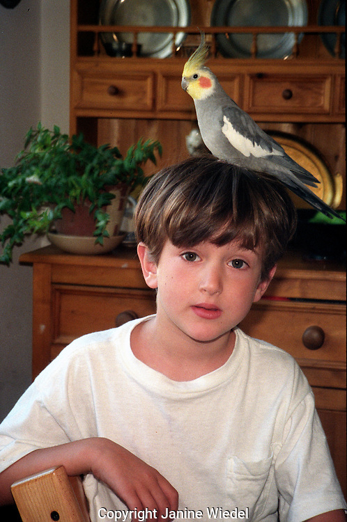 Young boy  with a Cockatiel on his head.