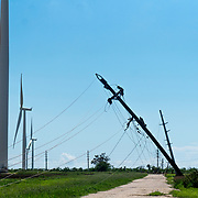 OCTOBER 13 - SANTA ISABEL, PUERTO RICO - <br /> Pattern Energy's wind turbines standing tall on a field near agriculture and farm animals in Santa Isabel after the path of  Hurricane Maria. Traditional wooden poles with power lines were felled by the hurricane.<br /> (Photo by Angel Valentin/Freelance)