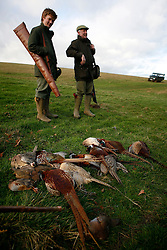 UK ENGLAND GRANTHAM 15DEC11 - The guns and the gamebirds they shot during the pheasant shooting at the Belvoir Castle Estate in Leicestershire, England...The shooting of game birds for sport involves the killing of millions of birds every year - over 35 million pheasants and 6.5 million partridges are produced to be used a live targets in the UK each year.....jre/Photo by Jiri Rezac..© Jiri Rezac 2011