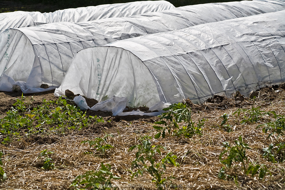 Remay floating row cover for organic pest control in the garden or farm.