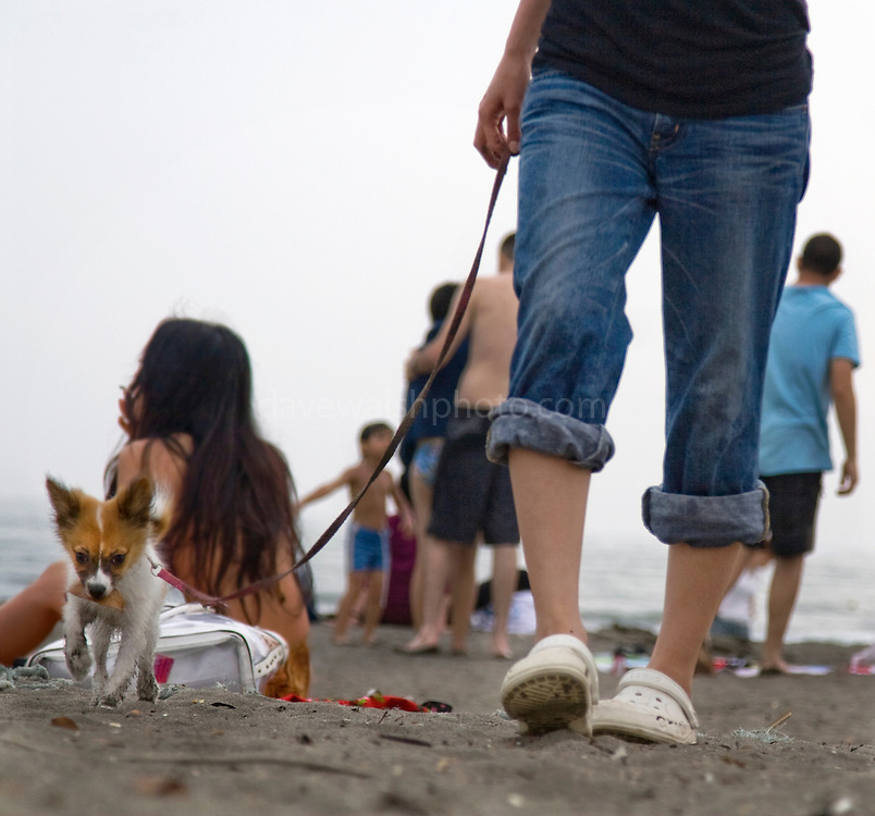 Walking the dog on the beach at Kamakura, Tokyo, Japan. Taken as candid, with the camera sitting on a blanket, letting autofocus make the decision.