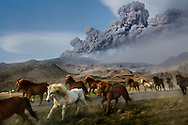 Herd of horses commutes to an other pasture south of Iceland's Eyjafjallajokull  volcano  as it threatened again European air traffic with a new ash cloud. 08 May 2010.