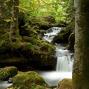 Cascade in wood scenery, with tree in the foreground, Besse et St Anastaise, Auvergne, France