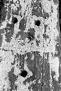 Sleeper wood, Glastonbury, Somerset, 1989