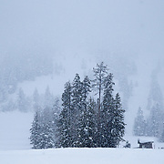 Looking towards the mountains during a massive winter storm from the base area of Jackson Hole Mountain Resort.