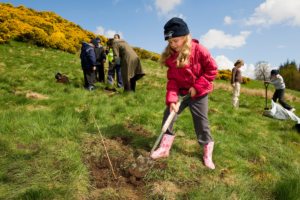 Children planting trees at Geordie's Wood, Yetts of Muckart, Perthshire