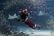 Dec. 15, 2015 - Seoul, South Korea - Dec 15, 2015 - South Korea, Seoul : A Diver wearing a Santa Claus outfit swims with fish in a aquarium during a Christmas event at the Coex Aquarium in Seoul, South Korea. The aquarium held the event during the Christmas season. Christmas is one of the biggest holidays celebrated in South Korea with Christians forming over half the population. <br /> ©Exclusivepix Media