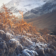 Loved the cool tones of the frost layer against the warm reds from the warming autumn sun