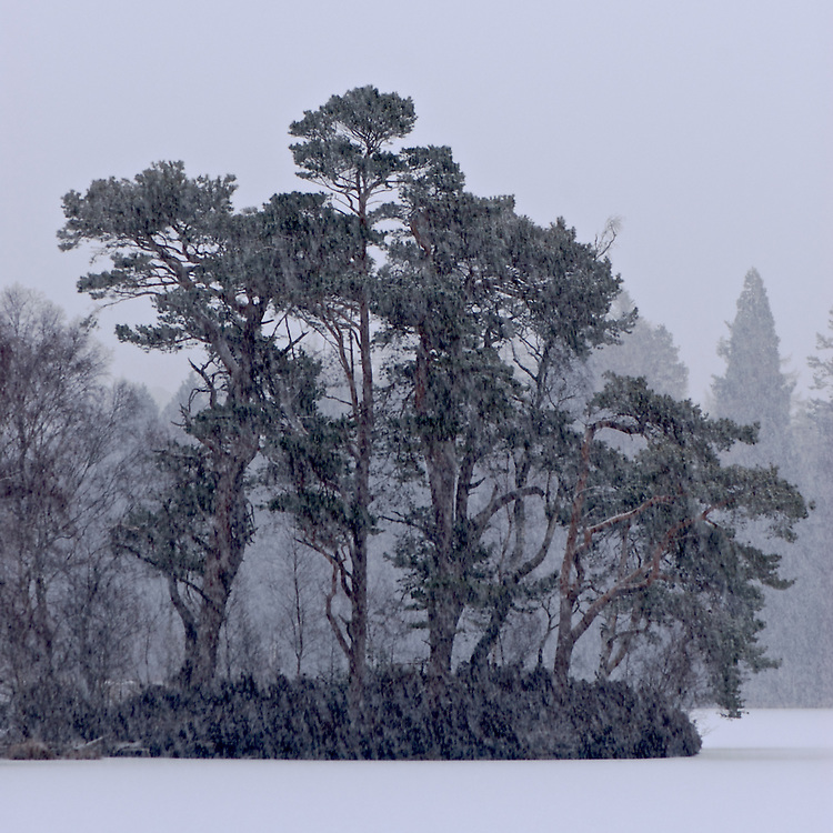Tarn Howes in the Snow