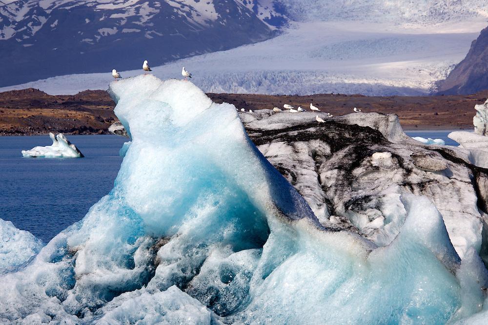 Seagulls sit atop the ice at Jökulsárlón, a large glacial lagoon in southeast Iceland bordering Vatnajökull National Park. The lagoon is situated at the head of Breiðamerkurjökull glacier.
