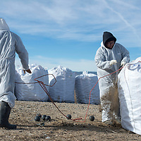 From left Alvin Martine, Vanessa Chatto and William Pino from Magnum Steel Building haul a bag of bird balls out of one of the lagoons in the Grants Wastewater Treatment Plant Thursday. Magnum Steel Building, based in Moriarty, has been working on cleaning up the plant since mid-December.