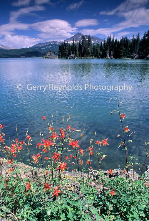 Wildflower, Flower, Red Flower, Columbine Wildflowers, Columbine, Sparks Lake, Bend, Oregon