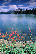 Wildflower, Flower, Red Flower, Columbine Wildflowers, Columbine, Sparks Lake, Bend, Oregon