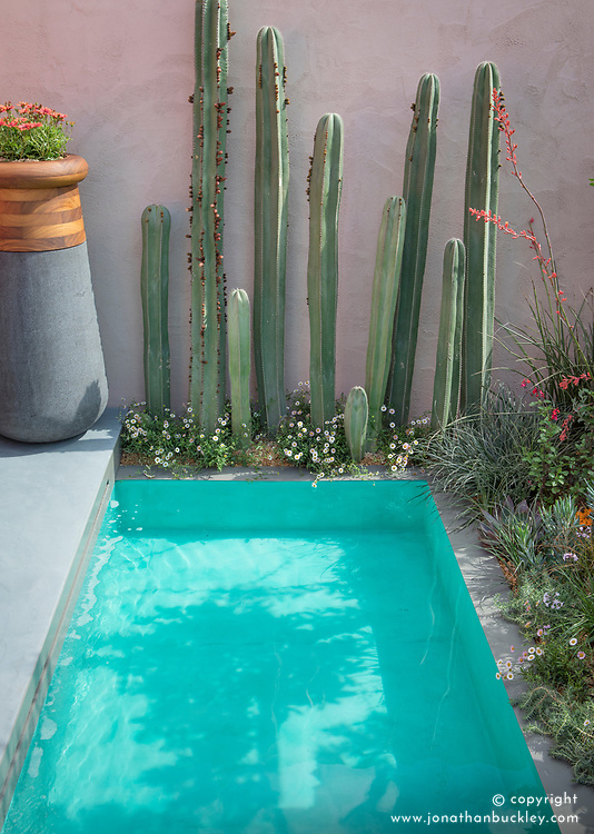 Beneath a Mexican Sky Garden, Stenocereus - Cactus - planted at edge of turquoise pool. Design: Manoj Malde, Built by: Living Landscapes, Sponsored by: Inland Homes PLC