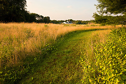 A mowed path in a hay field in Bridgewater, Massachusetts.  Summer.