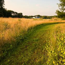 A mowed path in a hay field in Bridgewater, Massachusetts.  Summer.