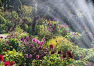 A sprinkler water over Dahlias in the sunken garden during the Dahlia Festival at Chenies Manor Garden, Rickmansworth, Buckinghamshire, UK