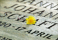 17/4-OVERVEEN- 57 jaar na de dood van de doodgeschten verzetsstrijdster Hannie Schaft. Het graf is op de Eere Begraafplaats in de Kennemerduinen.