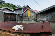 Aoshima, Ehime prefecture, September 4 2015 - Cat lazing in the afternoon.<br /> Aoshima (Ao island) is one of the several « cat islands » in Japan. Due to the decreasing of its poluation, the island now host about 6 times more cats than residents.